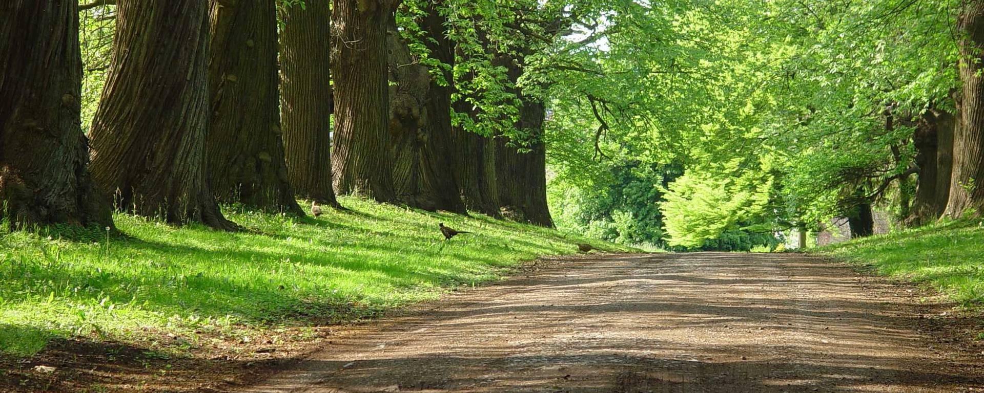 Chemin dans les bois d'Amay