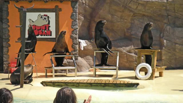 Show d'otaries au parc Mont Mosan