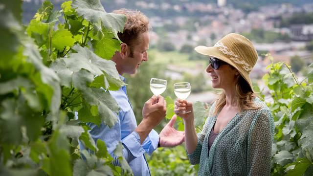 vignoble en Terres-de-Meuse - WBT David Samyn