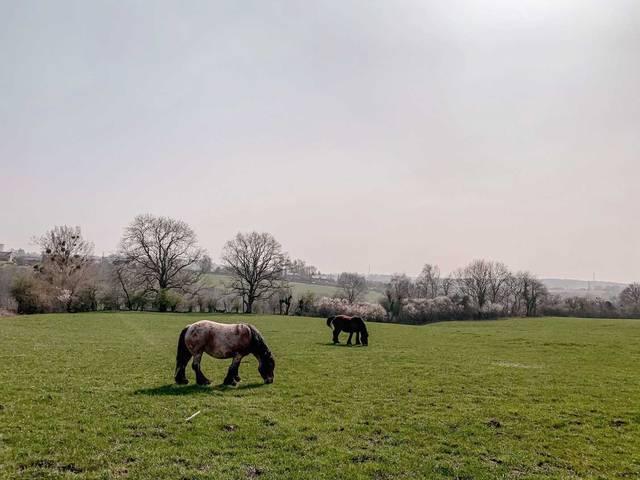 Deux chevaux dans une prairie