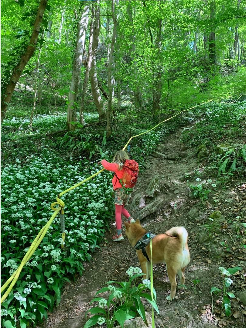 Jeune fille avec un chien grimpant dans les bois