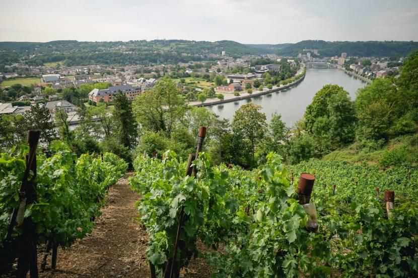 Vue des vignobles sur Huy
