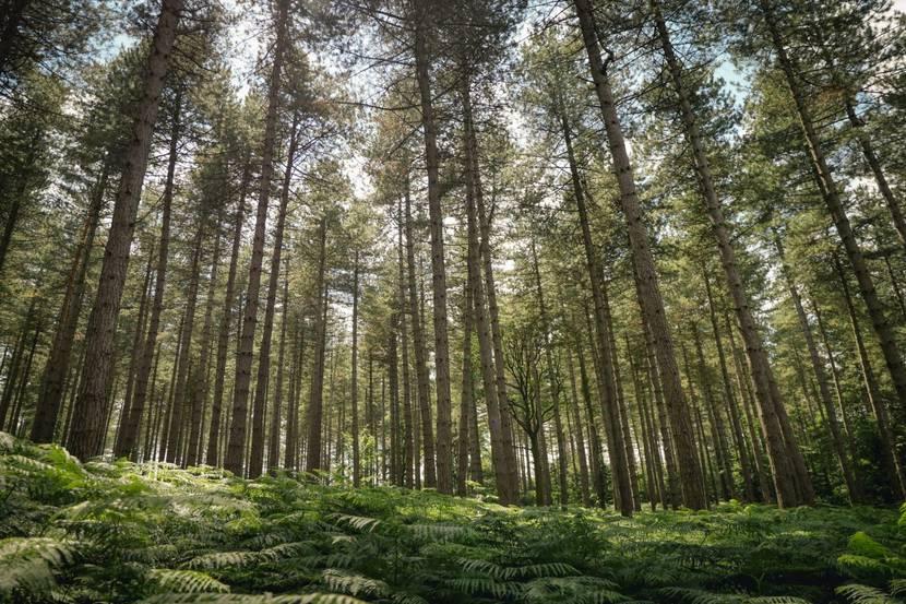 Forêt dans l'Ardenne condrusienne