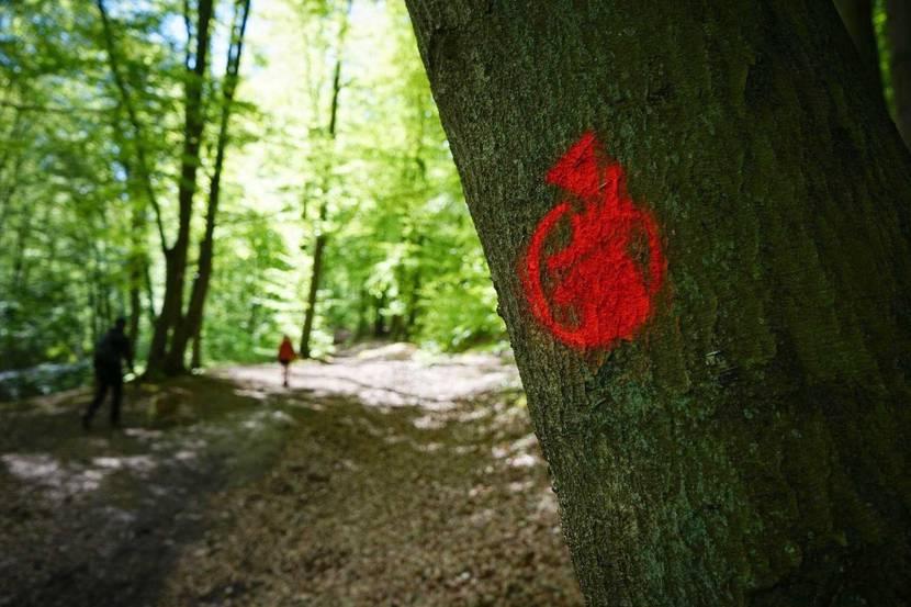 Balise dans les bois